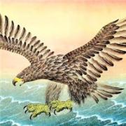 大鹏鸟图片头像大全,大鹏展翅气吞山河飞九天图片头像