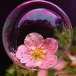 泡泡花头像图片大全,泡泡里面的唯美花花世界头像图片