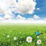 绿色风景头像 唯美的蓝天白云绿色风景头像图片