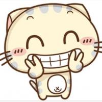 超可爱cc猫咪头像图片大全