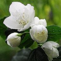 好看的头像图片小清新花朵