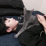 男头抱猫头像 高清男的抱着猫头像安然自在