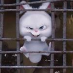爱宠大机密兔子图片头像 超萌可爱的爱宠机密兔子头像高清