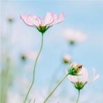 微信头像花朵图片大全 高清漂亮好看的微信花朵头像