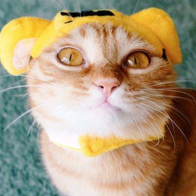猫狗情侣头像一对两张 高清好看的一猫一狗搞怪情侣头像图片