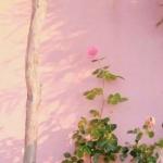 粉红色背景头像小清新 满满的小清新少女心超好看