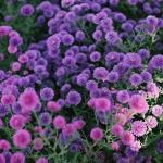 最好看的微信花朵头像图片 高清好看的女人微信头像花朵图片