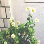 漂亮的微信头像图片花大全 高清小清新风格的漂亮花朵微信头像