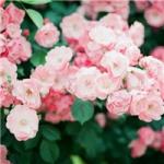 花卉头像图片大全 最好看的植物花卉头像图片