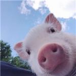 qq动物头像萌宠 搞笑有创意的可爱萌宠qq头像最新图片