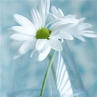 清新花朵头像图片大全