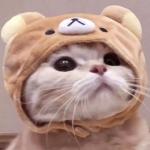 情头猫 高清可爱超萌的猫咪cp头像图片