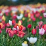 微信漂亮花朵头像图片大全 高清唯美的美丽漂亮花微信头像