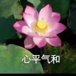莲花带字图片微信头像图片