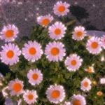 春天花朵风景头像 高清唯美有意境的春天花朵图片头像