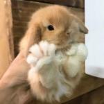 可爱兔子头像高清 可爱真实的小兔子超级可爱