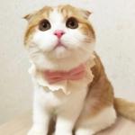 橘猫头像 高清可爱的橘猫头像高清无水印图片