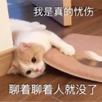 搞怪猫头像带字 高清带字的实力卖萌搞怪猫咪头像图片