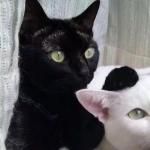 搞笑动物情侣头像 搞怪的动物情侣头像猫狗高清图片