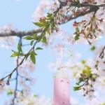 微信风铃头像 超清唯美的玻璃风铃头像图片