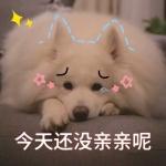 狗狗搞笑文字图片头像 超高清可爱的狗狗搞笑配图文字头像
