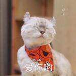 猫咪文字头像图片 超高清萌萌的小猫头像带字