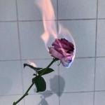 一支玫瑰花图片头像,高清霸气高贵的玫瑰花头像精选