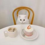 高清头像白猫,可爱优雅吃东西的可爱小白猫
