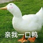 最近流行的鸭子表情包头像图片