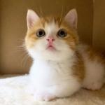 超萌小猫头像,高清可爱的超萌小奶猫头像图片
