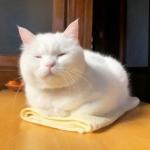 高清大白猫头像可爱图片精选