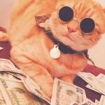 土豪猫图片头像,很土豪很大佬猫头像