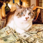 猫咪微信头像发财暴富,高清财运亨通的发财暴富头像