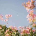 高清唯美星空头像 高清好看的星空远景风景图片头像