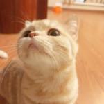 超萌的微信猫咪头像 高清可爱的超萌猫咪头像微信图片