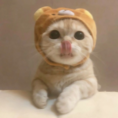 超萌的微信猫咪头像