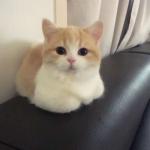 萌猫头像图片高清 高清超萌的猫头像可爱微信头像图片