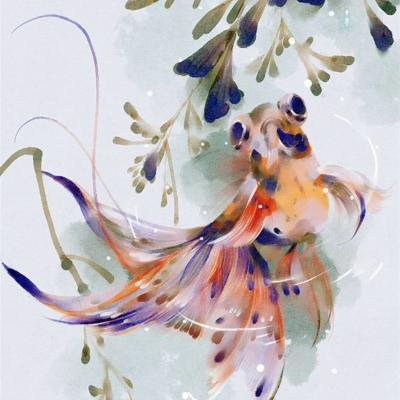 锦鲤微信头像