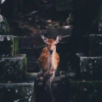 鹿照片头像图片大全 高清有意境的森林鹿唯美图片头像