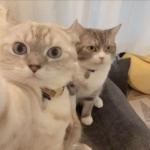 猫咪照片头像大全 高清好看的猫咪可爱萌图头像