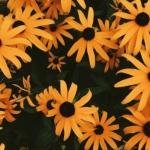 橙色系静物头像 高清好看的橘色系头像图片