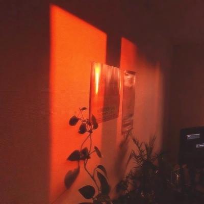 橙色系静物头像