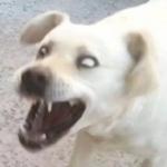 沙雕狗子的图片头像 高清搞笑沙雕适合做头像的狗子图片
