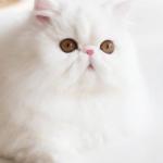可爱猫咪萌宠图片头像 高清好看的高清猫咪头像