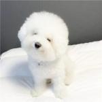 可爱狗狗微信头像 高清可爱好看的狗狗微信头像图片