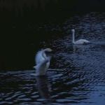 暗色风景图片头像 高清安静的暗色系风景图片头像