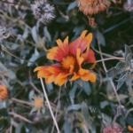 安静好看的唯美花朵意境图片高清头像