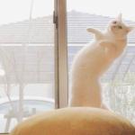 可爱的白猫头像 高清超萌的白色小猫咪头像图片
