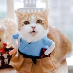 微信猫星人头像 高清搞怪的喵星人可爱头像图片
