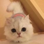 QQ头像萌萌哒小动物 高清超萌的可爱动物QQ头像图片